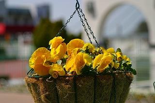 レオマの春